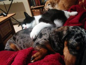 cat vet dog on couch