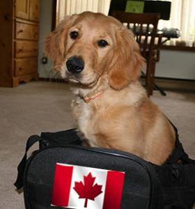 Dog sitting in a travel bag